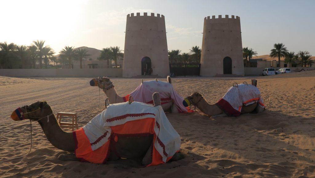 camels outside arabian nights village