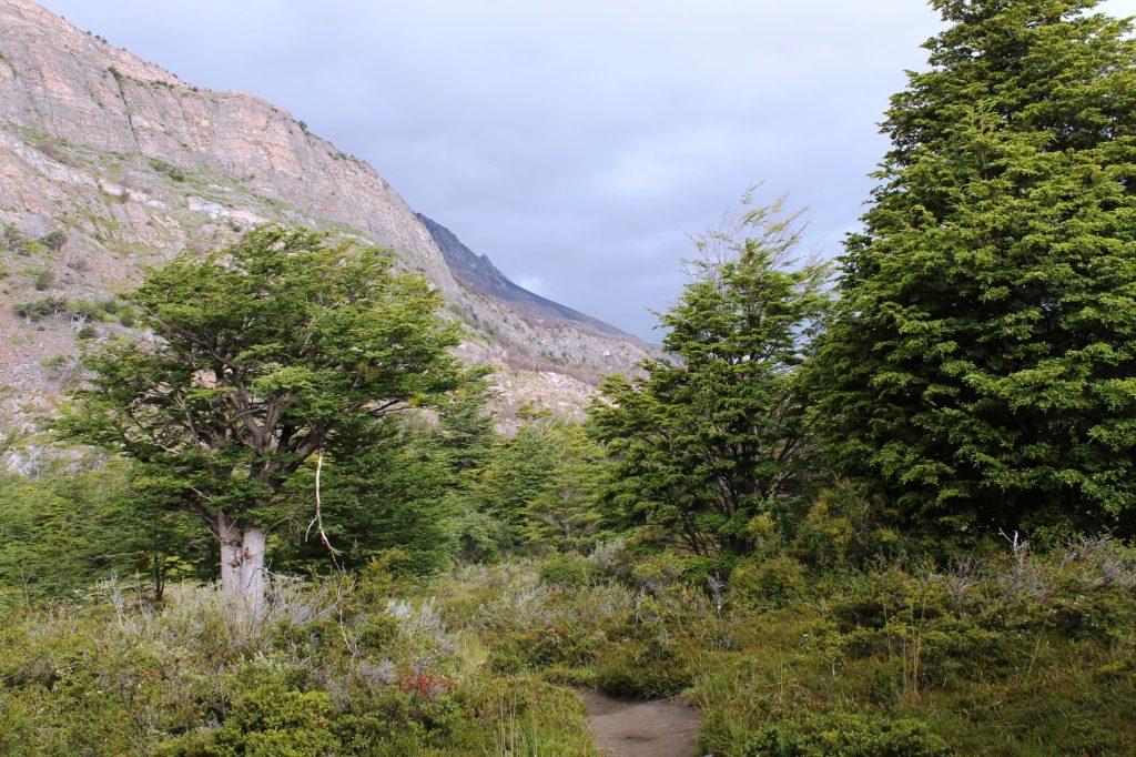 Torres Del Paine near Refugio Grey
