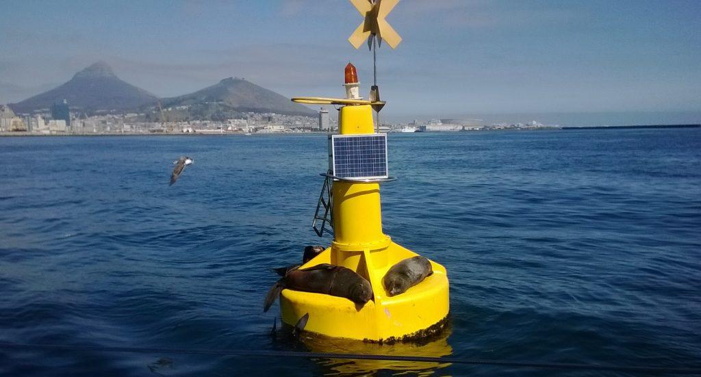 cape fur seal buoy cape town