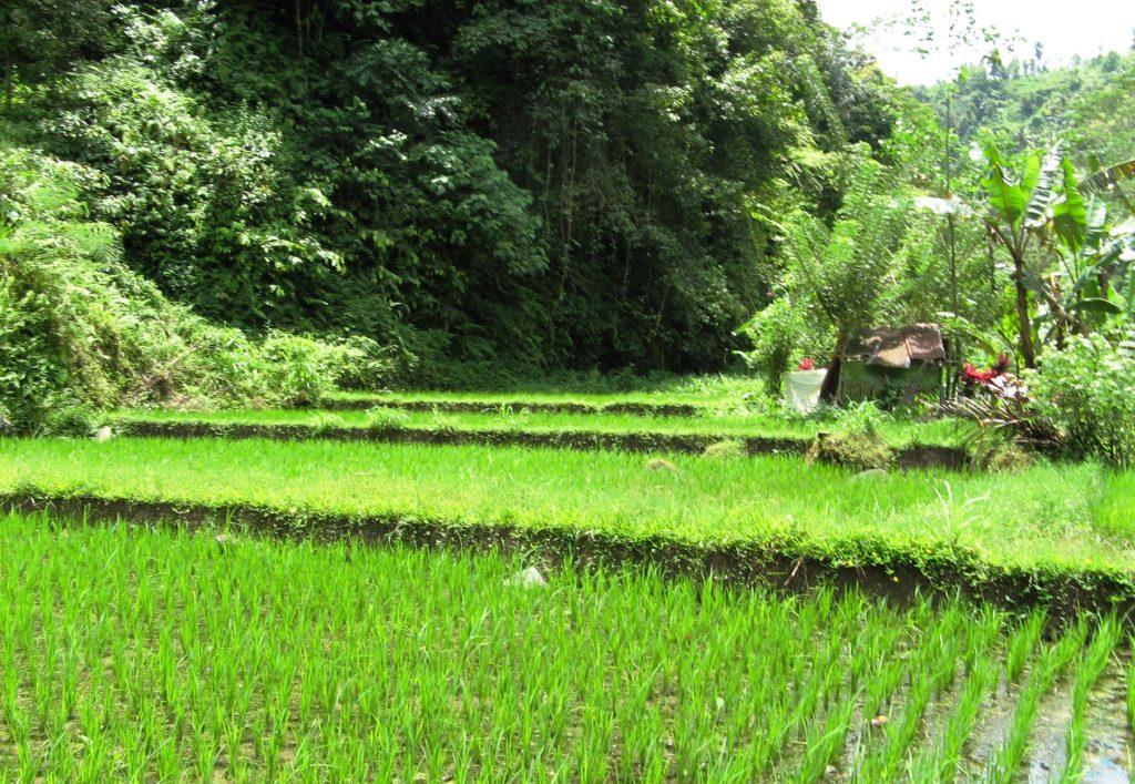 Bali plantations