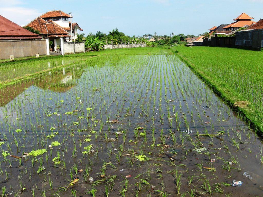 plantation Bali
