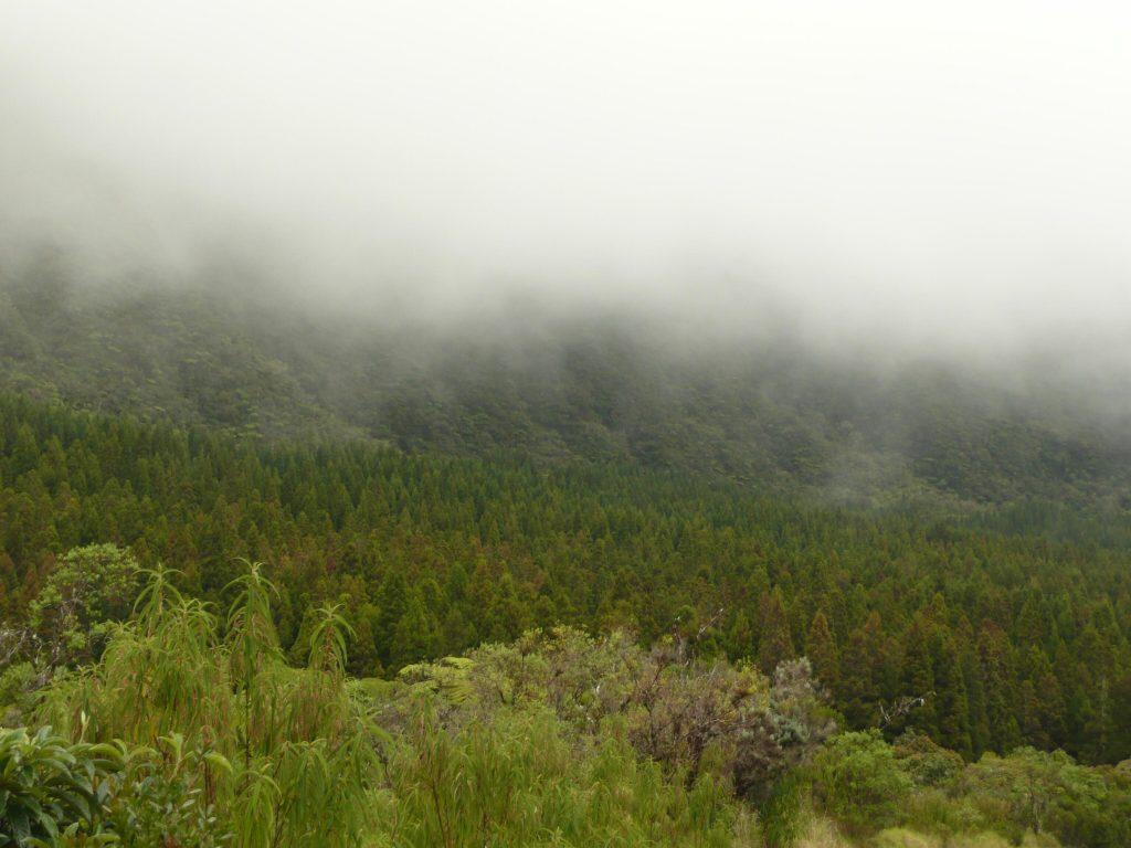 Bebour Forest