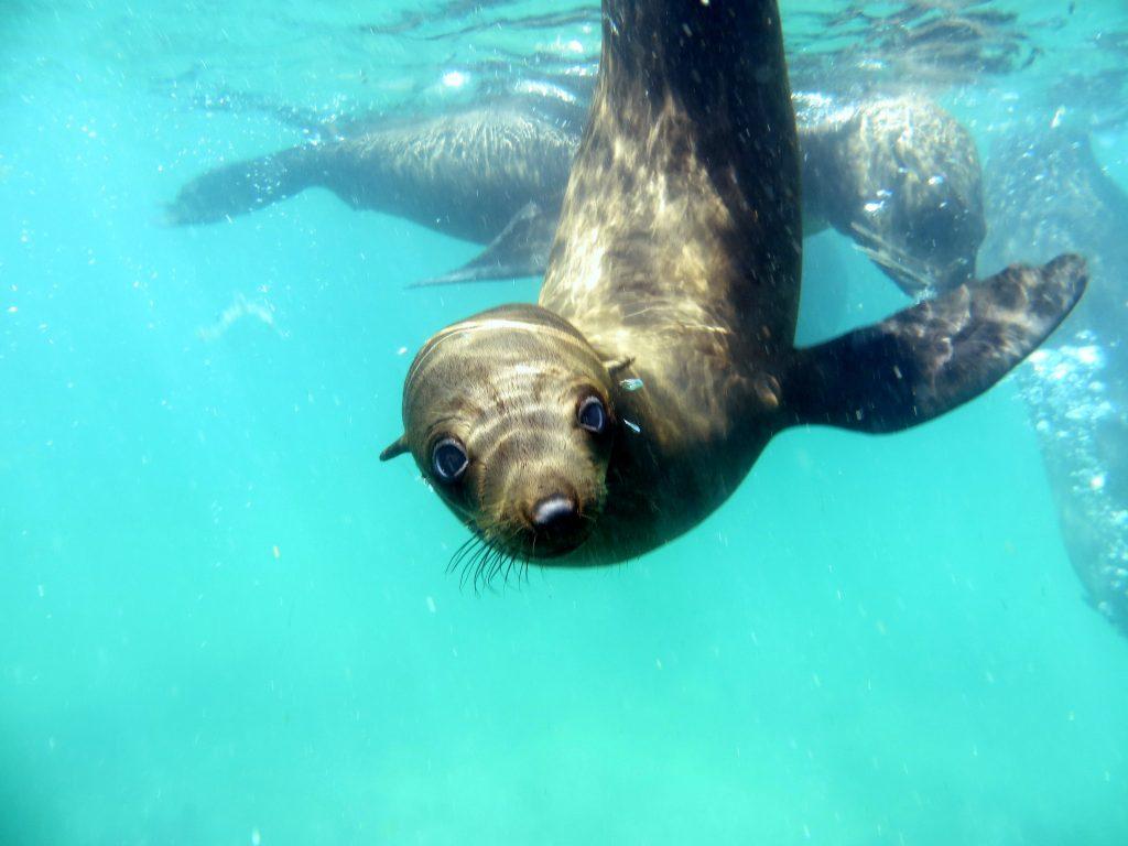 offshore adventures fur seals