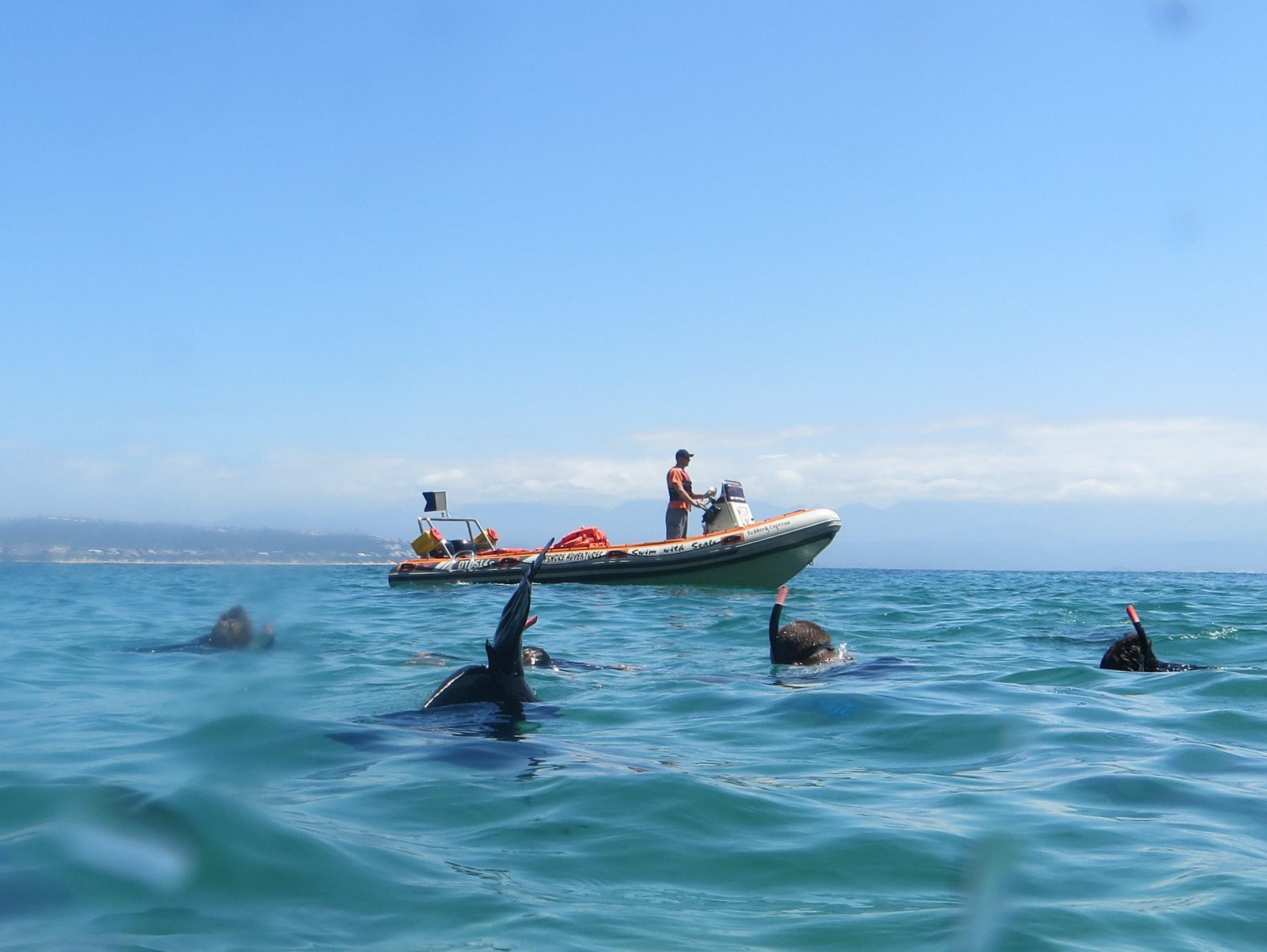 offshore adventures seals