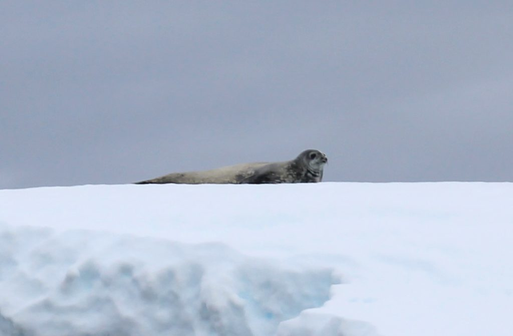 weddell enterprise isl seal 2