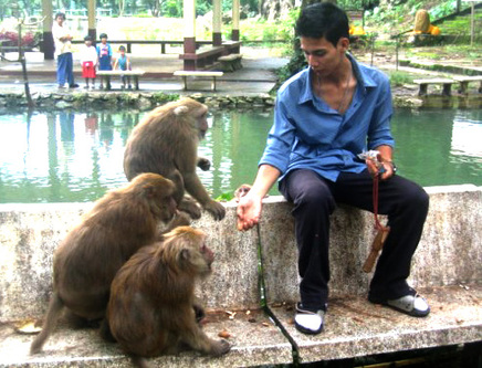 Monkeys_at_tham_plaa