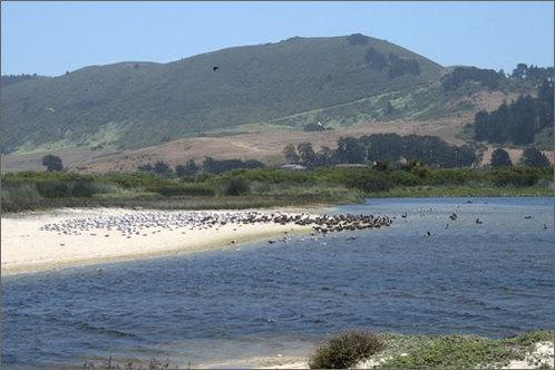 Carmel_coast