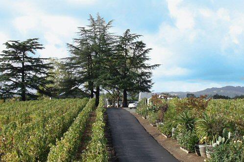 Vanderheyden Vineyards-Winery in Napa, California