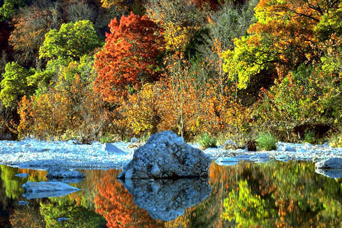 Foliage_reflection--lost-maples