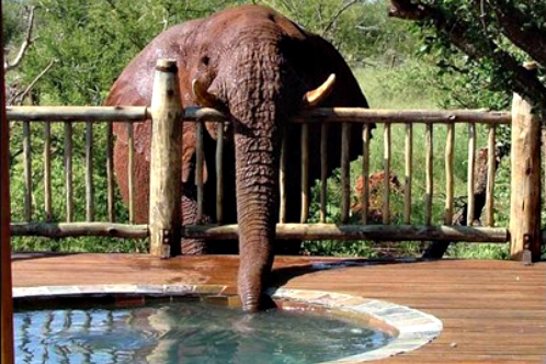 205837-etali-safari-lodge-north-west-province-south-africa