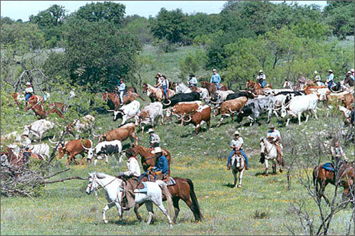 Cattle_drive