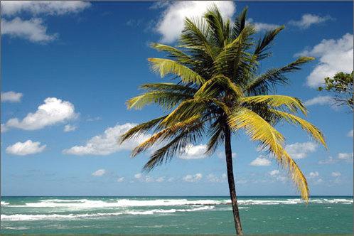 Pueto_rico_beach