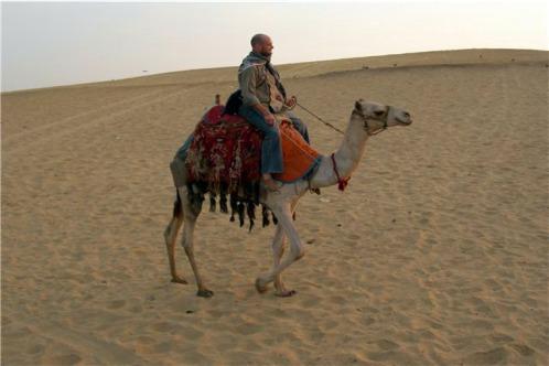 Trazzler_aswan_camel