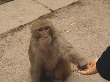 Monkey_trazzler