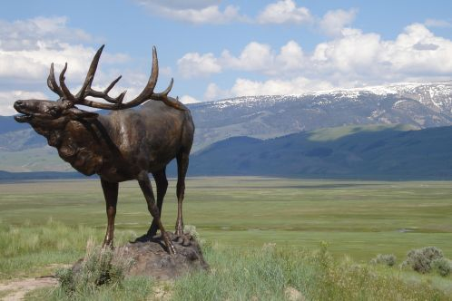 Elk_sculpture_trazzler