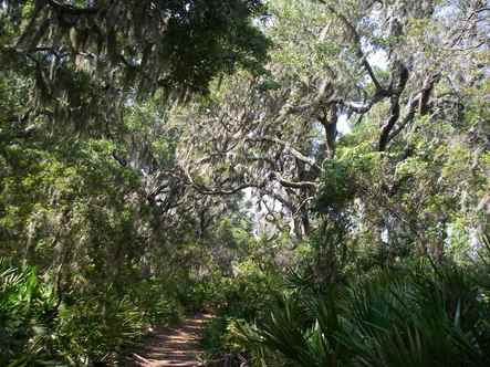 River_trail_on_cumberland_island_ga