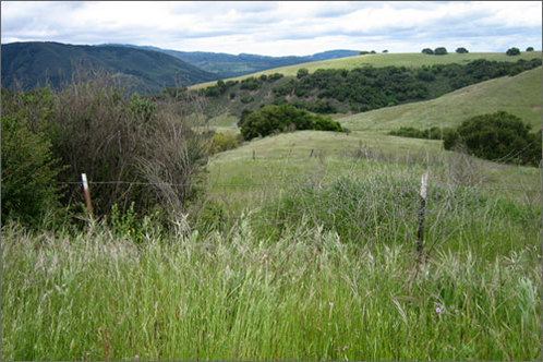 Carmel_valley_hiking
