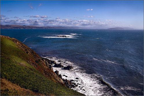 Bodega_head
