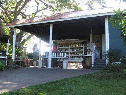 111._greenwell_coffee_farm_on_flank_of_mauna_loa