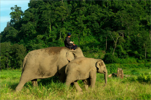 Thailand_elephants