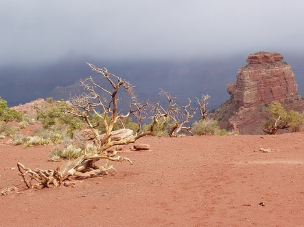 Grand_canyon_april_2009_038