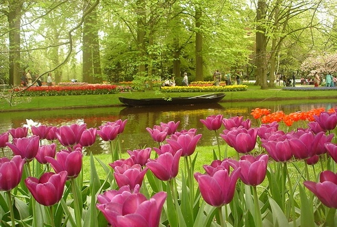 800px-keukenhof_may2006