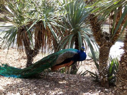 Arboretum_resized