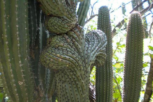 Cactus-sanctuary-mexico