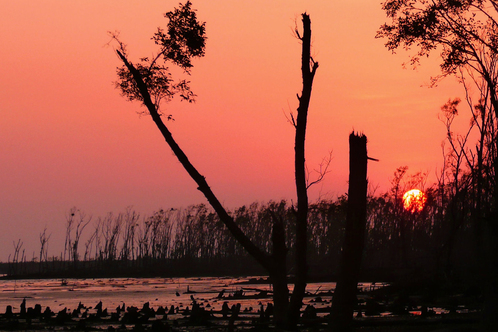 Sundarbans_a_few_months_aft