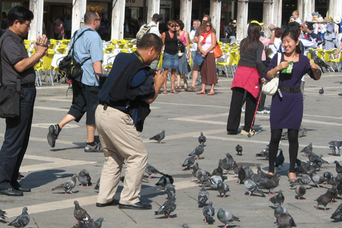 Trazz-pigeons