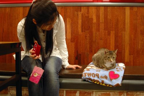 Gio_cat
