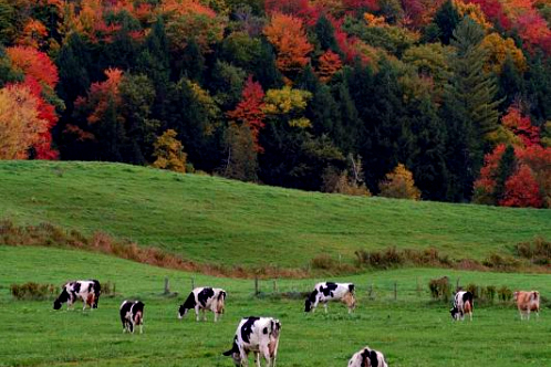 Vermont-northeastkingdom