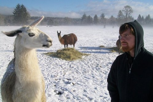 Llama_staredown