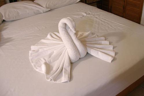 Swans_at_posada_luna_del_sur1