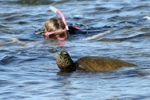 Kellyathena_kona_turtle_snorkel_hawaii_499x333