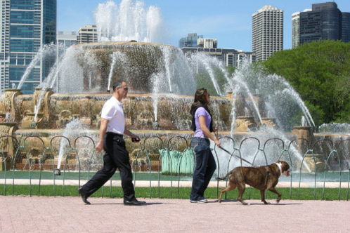 800px-couple_walking_dog_at_buckingham_fountain