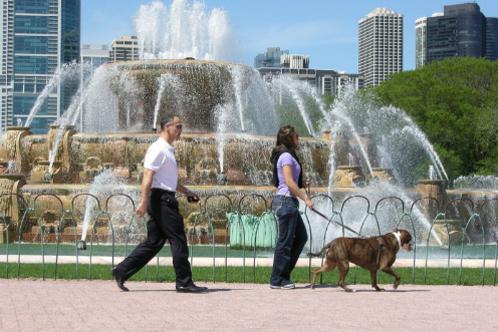 800px-couple_walking_dog_at_buckingham_fountain