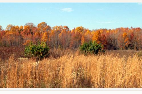 Atkins_arboretum
