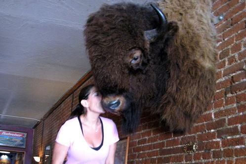 Trazb_buffalo