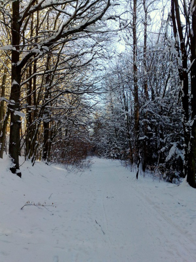 Trip photo #3/20 A path through the wood