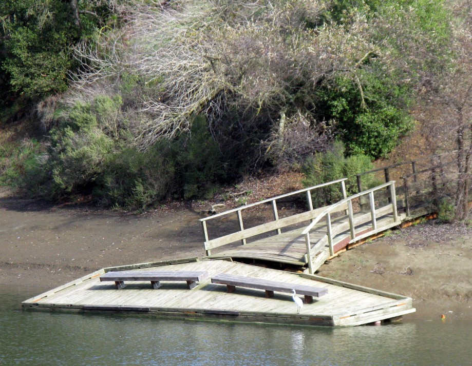 Trip photo #27/32 Lone egret and twisted dock - abnormally low water level