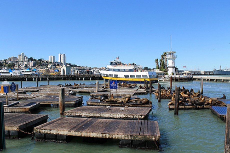 Trip photo #81/109 PIER 39 San Francisco