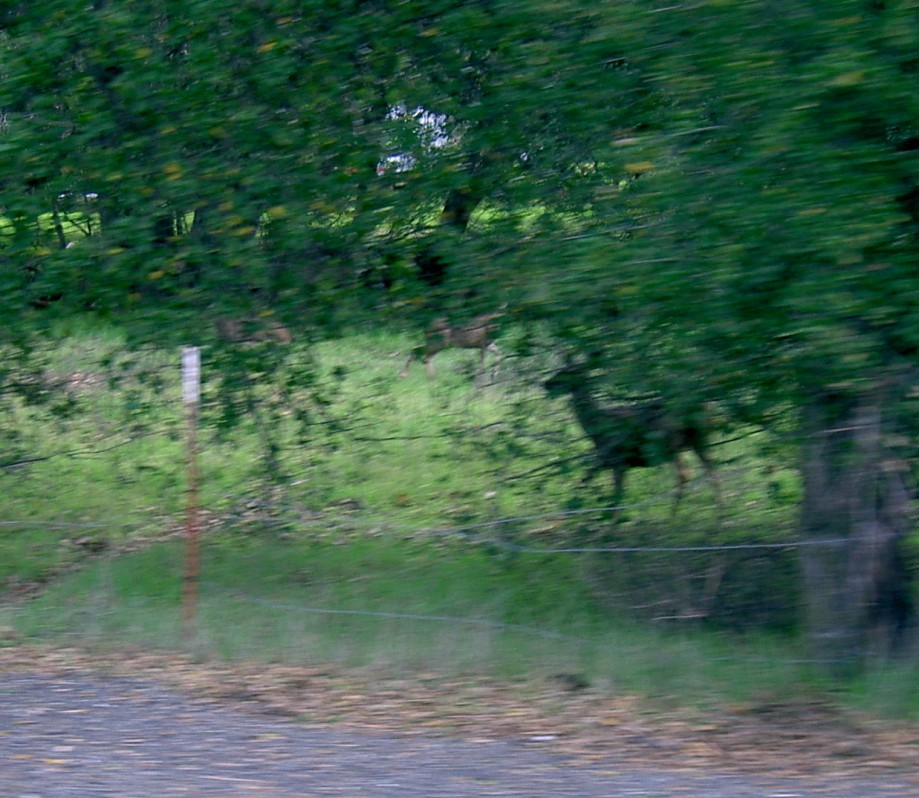 Trip photo #21/22 A few of about 10 deer by the road