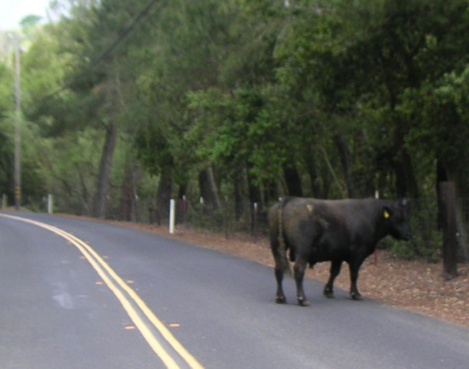 Trip photo #9/21 Road obstruction on the descent