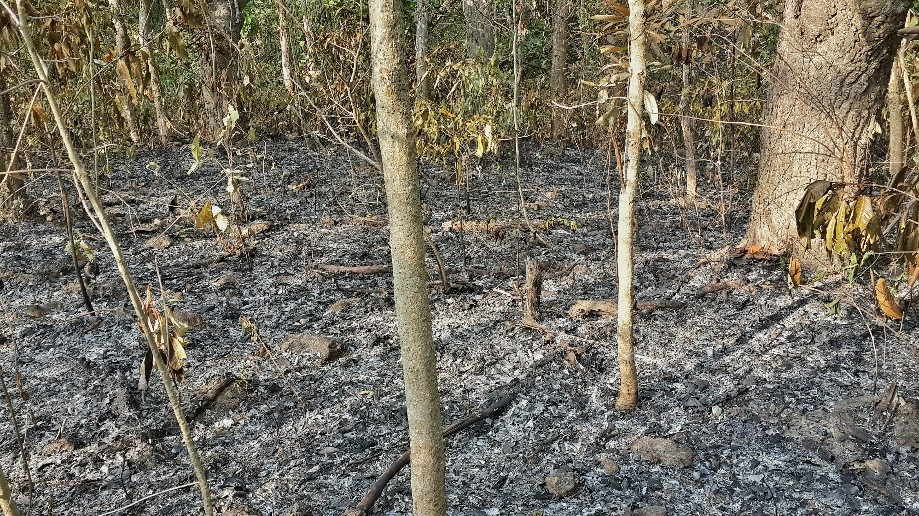 Trip photo #1/4 People burn the forrest floor every year, apparently for harvesting mushrooms.