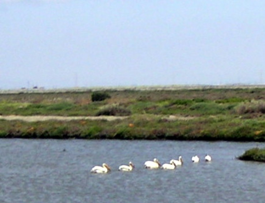 Trip photo #40/40 Pelican flock