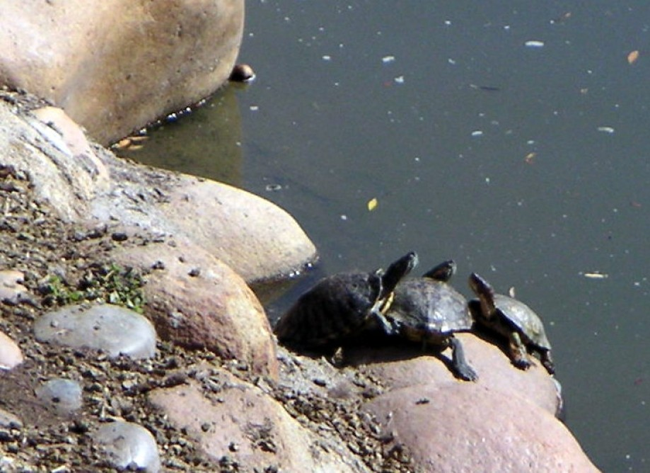 Trip photo #3/15 Turtles were gathering there too
