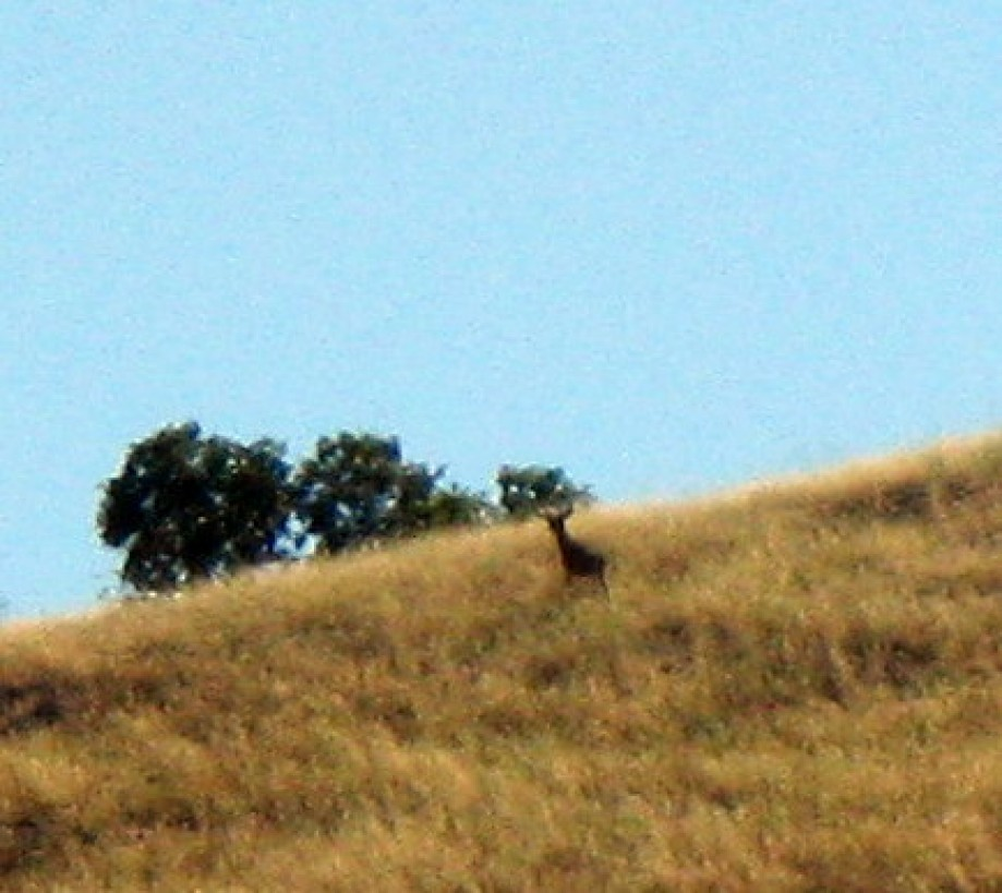 Trip photo #5/16 Deer near the ridge