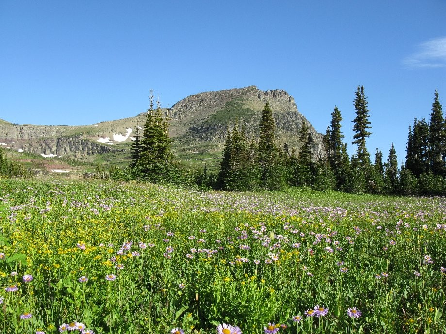Trip photo #2/21 Wildflower field at the pass