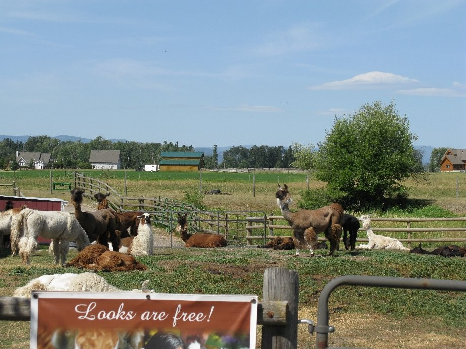 Trip photo #2/17 Llama farm